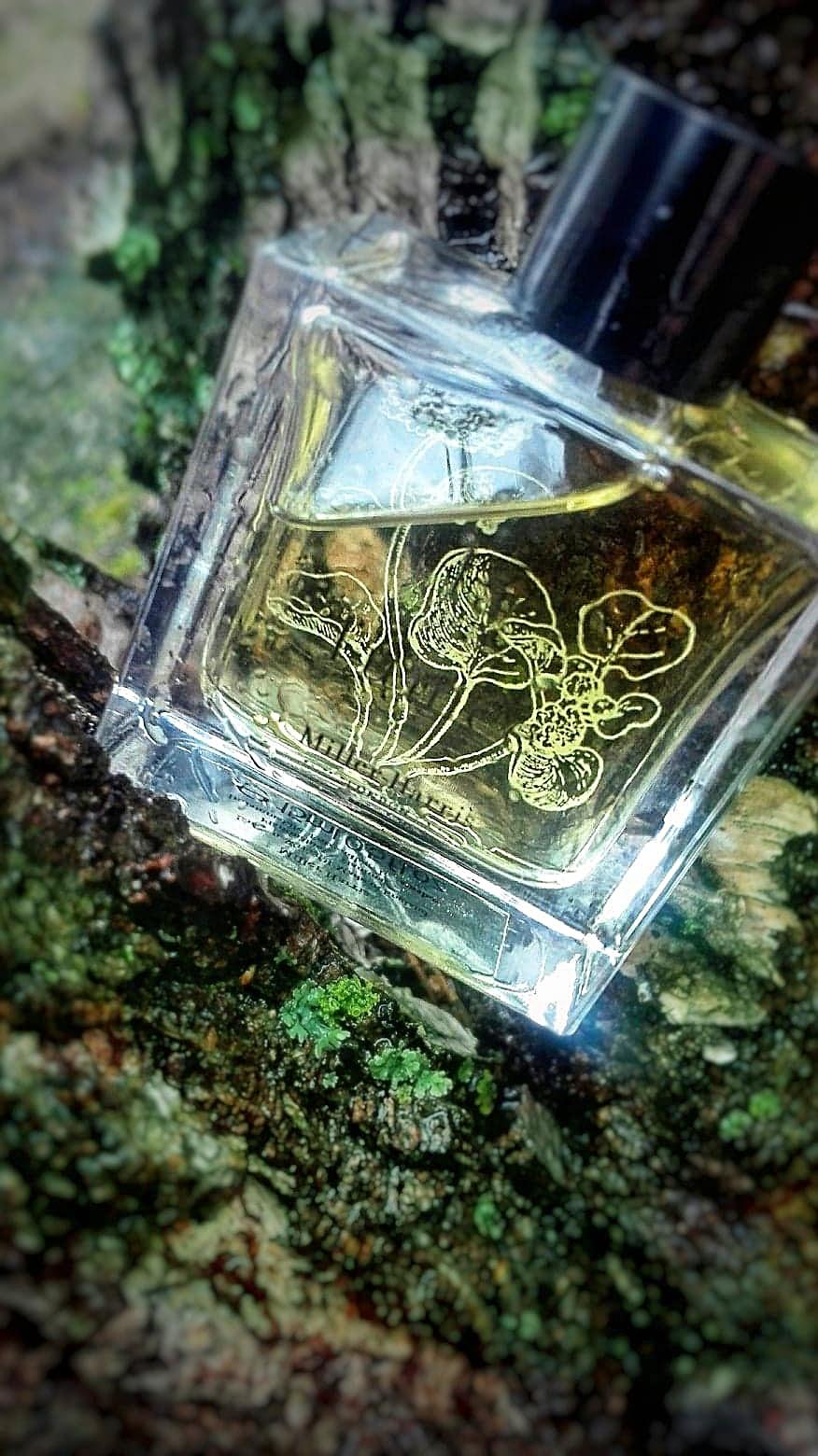 perfumy kardamon – Perfumanka
